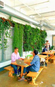 les plantes au bureau